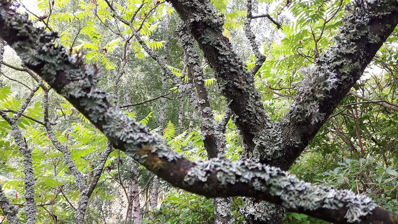 Historia zaczarowanego drzewa
