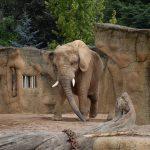 Góry stołowe z dziećmi i okolice – subiektywny przewodnik cz. II: Zoo Safarii i jaskinie